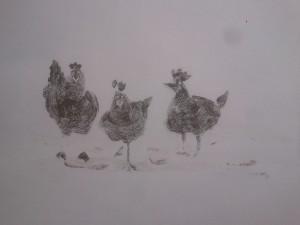 Les poules de Cécile