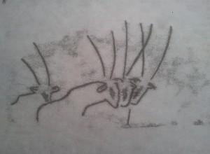 et encore des oryx